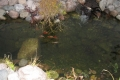 Patio Area Pond